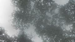 Rotating Spooky Forest with Mist - Low Angle Stock Footage