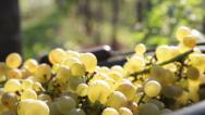 Stock Video Footage of Sunny Grapes