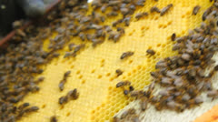 Beekeeper working with a comb with bees in a hive Stock Footage
