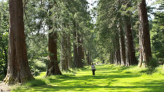Benmore Botanic Garden, Scotland, tallest trees Stock Footage