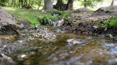 A close-up shot of a creek in a forest Stock Footage