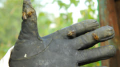 Honey bees on the hand of a beekeeper, black protective gloves Stock Footage