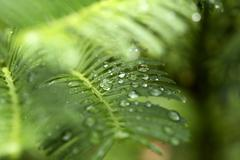 Background of  green leaves with raindrop Stock Photos