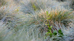 Gras DOF close-up Stock Footage