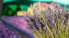 Lavender bouquet on colorful background with slider Stock Footage