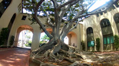 Mature Banyan Tree In Spanish Style Courtyard Stock Footage