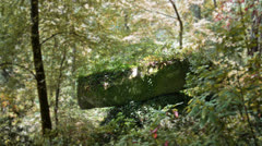 Stock Video Footage of enchanted Sintra forest rock