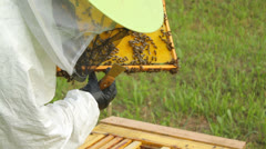 Beekeeper carefully looks at the bees on the honeycomb Stock Footage