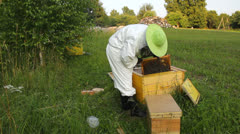 Beekeeping - beekeeper working on a beehive in nature Stock Footage