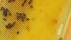 Very few bees on an empty honeycomb held in hands, bad year - stock footage