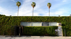 Palm trees behind ivy wall with back entrance Stock Footage
