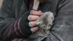 Grey kitten Stock Footage