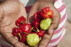 Hands full of chilly peppers bocas del toro panama Stock Photos