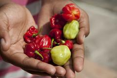 Hands full of colorful peppers bocas del toro panama Stock Photos