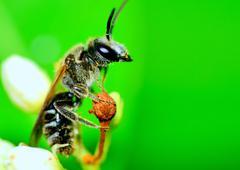 Solitary sphecid wasp Stock Photos