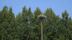White stork nest with young on a power line pole in a distance Stock Footage