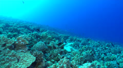 Swimming Over a Coral Reef Stock Footage