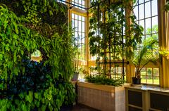 green wall in the howard peters rawlings conservatory, in druid hill park, ba - stock photo