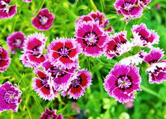 much beautiful flowers - stock photo