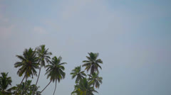 group of tropical palm trees against the sky - stock footage