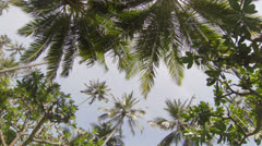 The tops of tropical trees against the sky Stock Footage