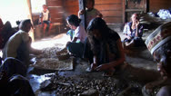 Stock Video Footage of Flores people in a jungle village preparing Cocoa Beans