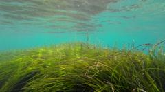 Undersea Stock Footage