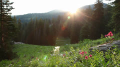Sunrise mountain flowers Stock Footage