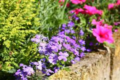 beautiful summer garden - stock photo