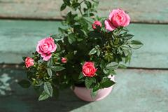 Romantic vintage roses background Stock Photos