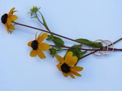 wedding rings and three yellow flowers - stock photo