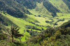 cocora valley, natural park of colombia - stock photo