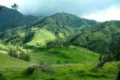 Cocora valley and the palm Stock Photos