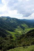 cocora valley and palm forests - stock photo