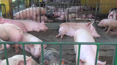 Pigs, Piglets, Hogs, Farm Animals, 2D, 3D - stock footage