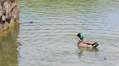 Lake in Maksimir park, Zagreb, Croatia. Stock Footage