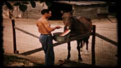 Man feeds watermelon to horse down on the farm, 189 vintage film home movie Stock Footage