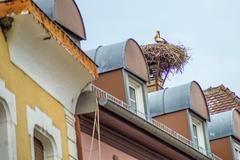 Stork in a nest Stock Photos