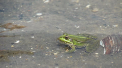 Russian frog leaves the scene in a jump Stock Footage