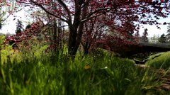 Slider Shot of Trees in Park Stock Footage