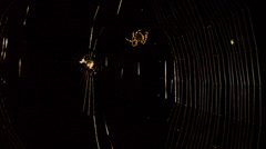 Spider in Web Black Background Stock Footage