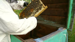 Person takes a honey comb with bees out of the hive and inspects it Stock Footage