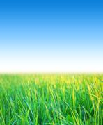 blue sky with grass - stock photo