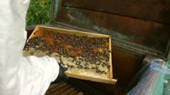 Beekeeper working, bees in honeycomb Stock Footage