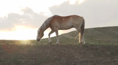 Horse on hill at sunset slow motion - stock footage