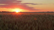 Stock Video Footage of Awesome Wheat Field Sunrise