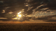 Sunrise Over Wheat Field Time Lapse Stock Footage