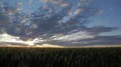 Awesome Wheat Field Sunrise Stock Footage