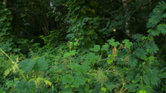 Wonderful nature, forest in the summer morning, steadicam shot Stock Footage