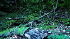 Wild Nature Stock Footage